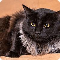 Adopt A Pet :: Kingsley - Chesapeake, VA