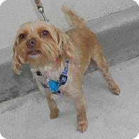 Adopt A Pet :: Peach - Umatilla, FL