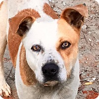 Adopt A Pet :: Bella - Augusta, GA