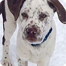 Adopt A Pet :: Bumper