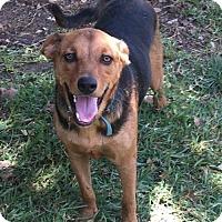 Shepherd (Unknown Type) Mix Dog for adoption in Olympia, Washington - Max H