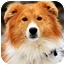 Photo 1 - Collie Dog for adoption in Pawling, New York - MARLIN