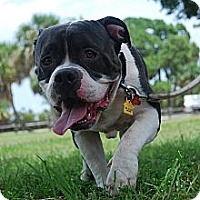 Adopt A Pet :: Truman - Lake Worth, FL