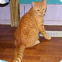Adopt A Pet :: Holligan - Dover, OH