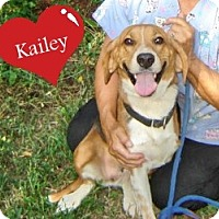 Adopt A Pet :: Kailey - Franklinton, NC