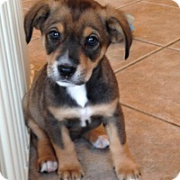 Adopt A Pet :: Penny - Marlton, NJ