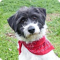 Adopt A Pet :: Arnold - Mocksville, NC