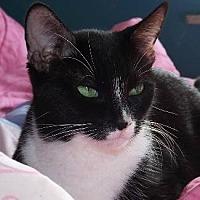 Adopt A Pet :: BELARUS - Pt. Richmond, CA