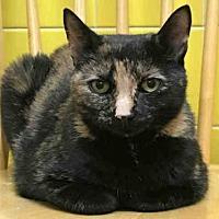 Adopt A Pet :: FUDGIE - Wainscott, NY