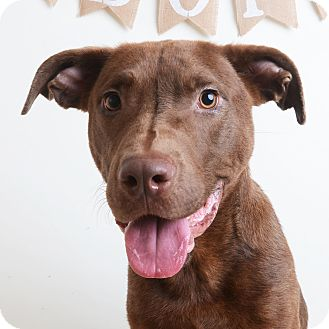 Mixed Breed (Medium)/Labrador Retriever Mix Dog for adoption in Wilmington, Delaware - Dale