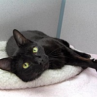 Adopt A Pet :: Reily - Stamford, CT