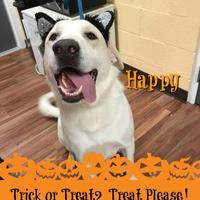 Adopt A Pet :: Happy - Greenville, NC