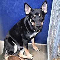 Adopt A Pet :: Jake - San Jacinto, CA
