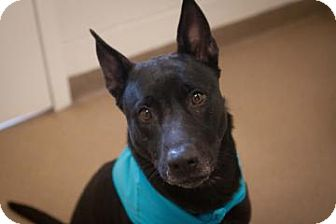 Terrier (Unknown Type, Medium) Mix Dog for adoption in Novelty, Ohio - Fern