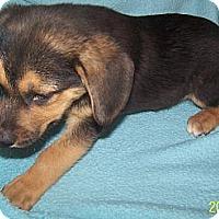 Adopt A Pet :: MAX - Southport, NC