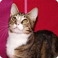 Adopt A Pet :: Brett-special loving 1 yr - Scottsdale, AZ