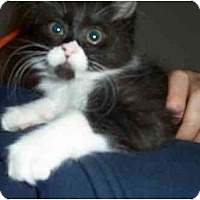 Adopt A Pet :: Oprah - Davis, CA