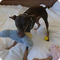 Adopt A Pet :: Pogo - Only $65 adoption fee! - Litchfield Park, AZ