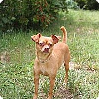 Adopt A Pet :: Chica - Knoxville, TN
