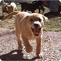 Adopt A Pet :: Genny - Jackson, TN