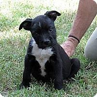 Adopt A Pet :: Kermit~meet me @ PetSense~ - Westbrook, CT