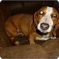 Adopt A Pet :: Cheeto - Lawndale, NC