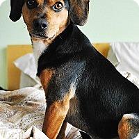 Adopt A Pet :: Hank - Hamilton, ON