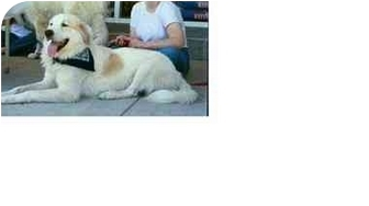 Great Pyrenees Dog for adoption in Kyle, Texas - Patch