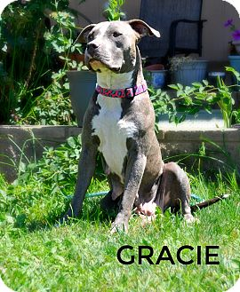Pit Bull Terrier Mix Dog for adoption in Sacramento, California - Gracie