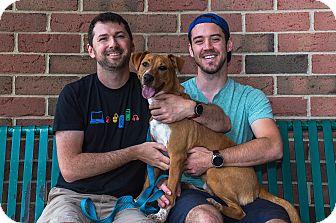 Terrier (Unknown Type, Medium) Mix Puppy for adoption in Livonia, Michigan - Jasper - Adopted 08/28/2016