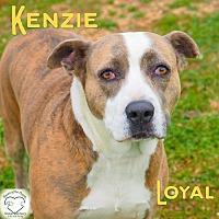 Pit Bull Terrier Mix Dog for adoption in Washburn, Missouri - Kenzie