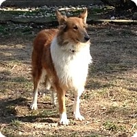 Adopt A Pet :: Mia - Powell, OH