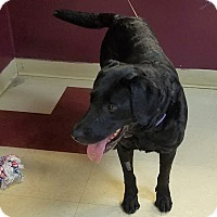 Adopt A Pet :: Raven - Red Wing, MN