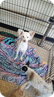 Spaniel (Unknown Type) Mix Dog for adoption in Brownsville, Texas - Helga