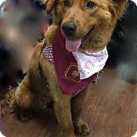 Adopt A Pet :: Oralie - BIRMINGHAM, AL