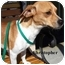 Photo 1 - Jack Russell Terrier Mix Dog for adoption in Slidell, Louisiana - Christopher