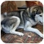 Photo 2 - Husky Mix Dog for adoption in Little Falls, Minnesota - Buddy