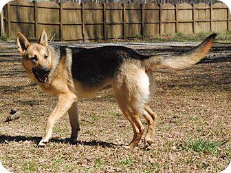 German Shepherd Dog Dog for adoption in Greensboro, Georgia - Gwen
