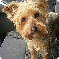 Adopt A Pet :: Gizmo(ADOPTED!) - Chicago, IL