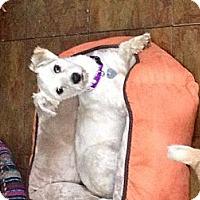 Adopt A Pet :: Matt - North Hollywood, CA