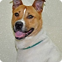 Adopt A Pet :: Buster - Port Washington, NY