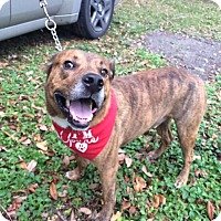 Adopt A Pet :: Tyson - Coral Springs, FL