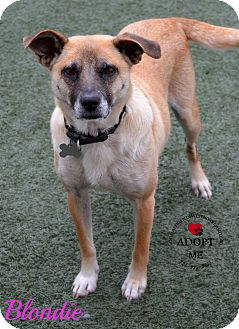 Terrier (Unknown Type, Medium) Mix Dog for adoption in Youngwood, Pennsylvania - Blondie
