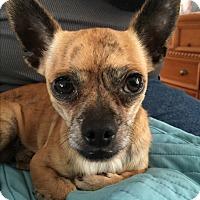 Adopt A Pet :: Paco - Kempner, TX