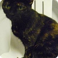 Adopt A Pet :: Athena - Hamburg, NY