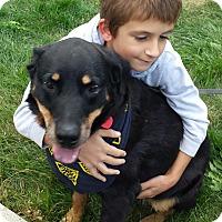 Adopt A Pet :: Jade - Frederick, PA