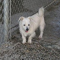 Terrier (Unknown Type, Medium) Mix Dog for adoption in Sherman Oaks, California - Benji