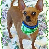 Adopt A Pet :: Jazzy - Las Vegas, NV