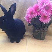 Adopt A Pet :: Diana - Columbus, OH