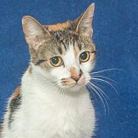 Adopt A Pet :: Dixie - Elmwood Park, NJ